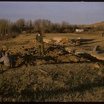Rebuilding replica of NWMP barracks.  Wood Mountain.  10/20/1964